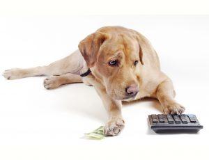 Quanto custa ter um pet?