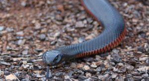 Efeito cobra pode afetar o seu bolso