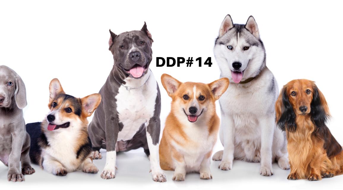 Aprenda com os cachorros – DDP#14